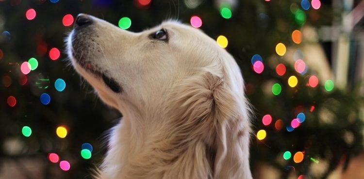 Nemecké útulky zakázali adopciu psov počas Vianoc