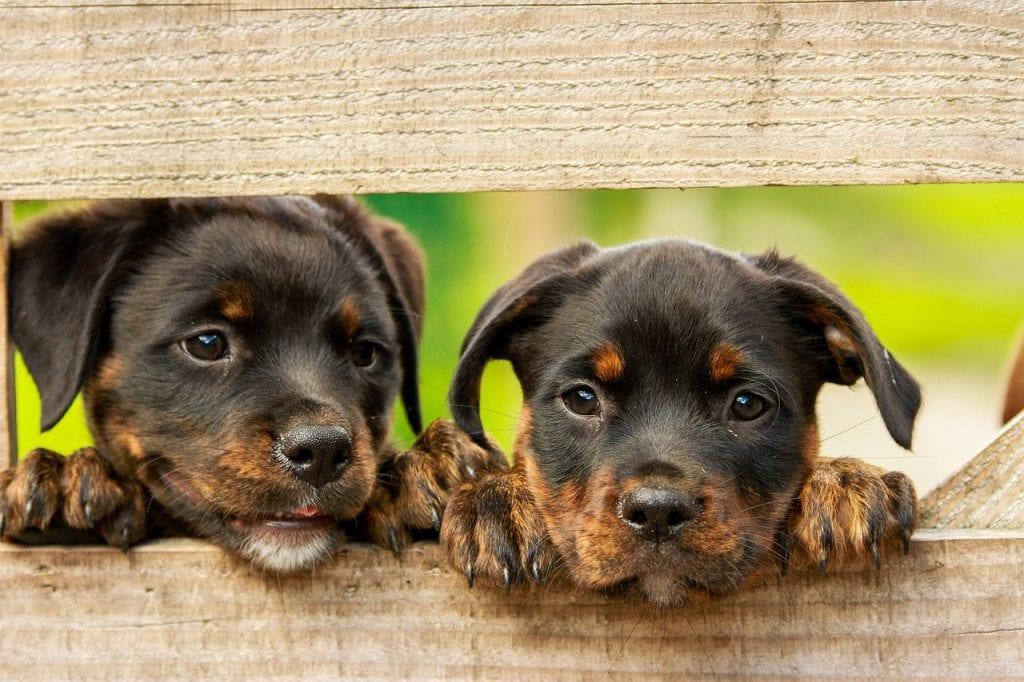 Vlastníte aj vy nejaké šteniatko?