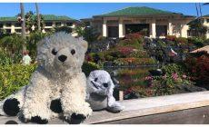 Stratený plyšový medveď si užíva predĺžený pobyt v luxusnom hoteli