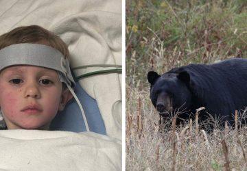 Trojročný chlapec bol nezvestný dva dni. Povedal, že sa túlal po lese smedveďom