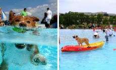 Letná dovelenka pre psíka existuje! Zoberte ho do psieho aquaparku
