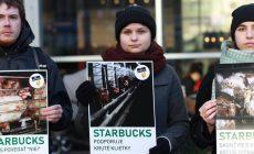 Starbucks odmieta zrušenie klietkového chovu sliepok. Verejnosť sa búri