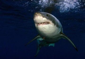 Vedci objavili niečo neskutočné. DNA žraloka by dokázala vyliečiť rakovinu