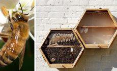 Chcete zachrániť včely? Nasťahujte si ich do obývačky. Poradíme vám, ako na to
