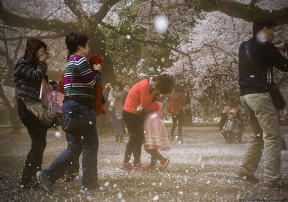 JAR V ROZKVETE: pozrite si najkrajšie fotografie japonských čerešní po celom svete