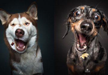 Aj psy majú mimiku! Ako sa tvária sekundu pred chytením maškrty?