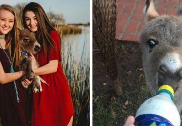Oslík ako domáce zvieratko? 17-ročná Payton zachránila malému oslíkovi život, dnes je z neho rozkošné stvorenie, ktoré miluje každý