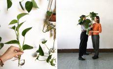 SWAP rastlín vládne svetu: ľudia si začínajú okrem oblečenia vymieňať už aj odrezky izboviek