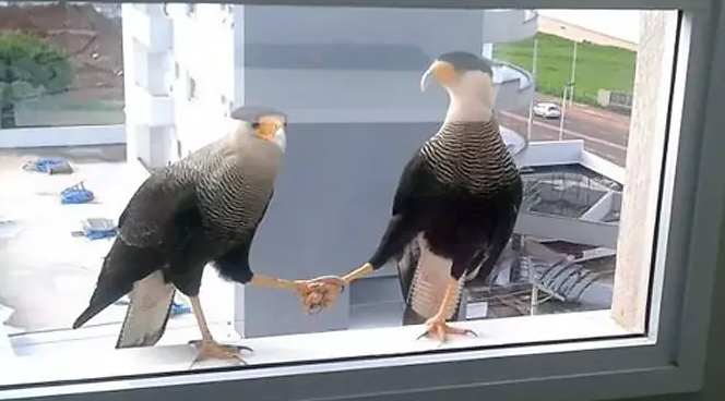 Fotky skutočných vtáky